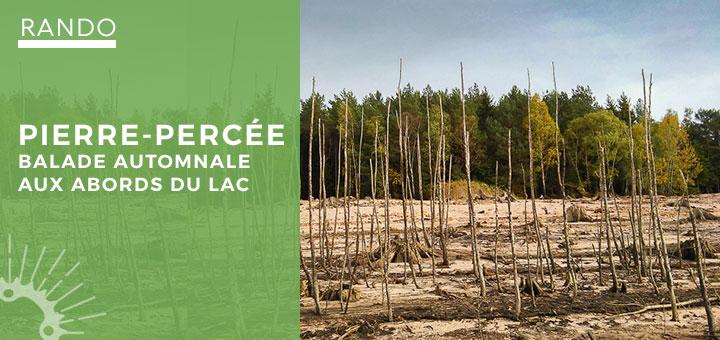 Arbres morts sur le sol sablonneux du lac de Pierre-Percée