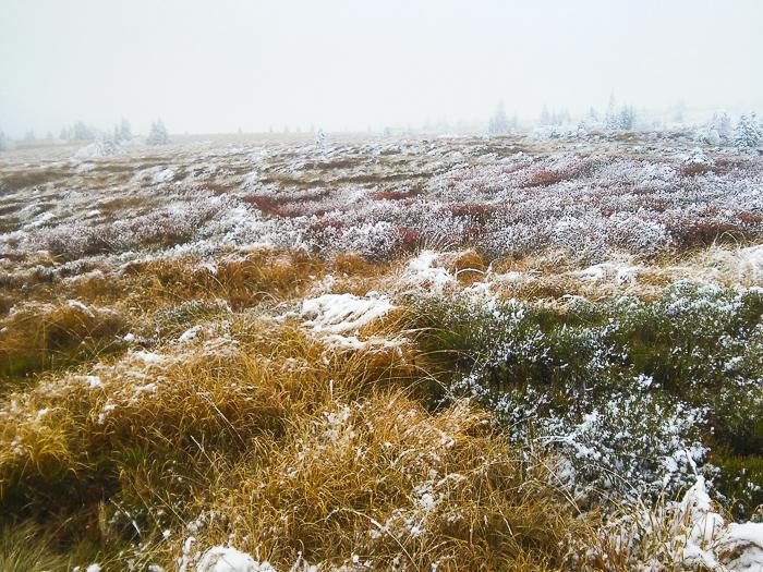 La chaume du Gazon du Faing gelée