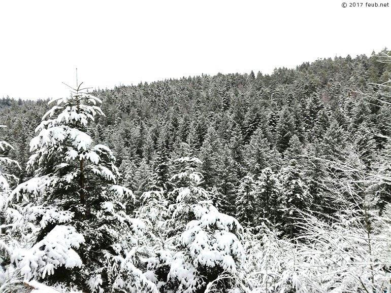 Les forêts vosgiennes enneigées