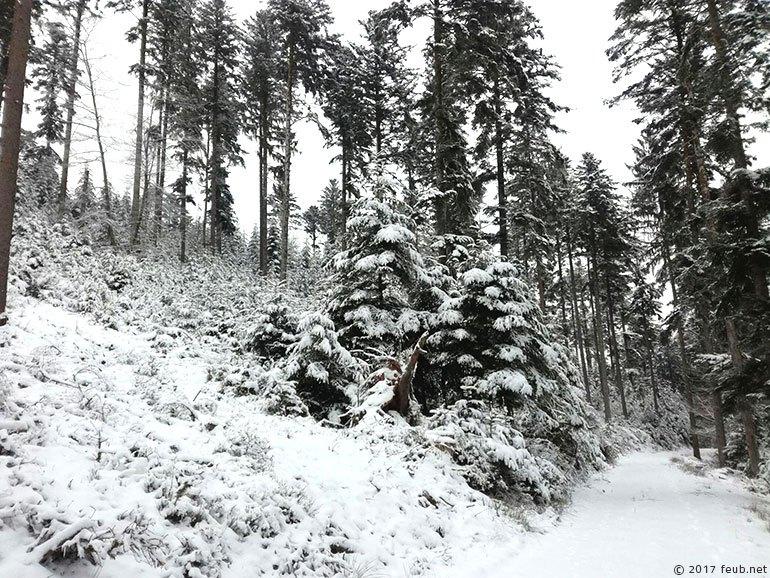 Trail running blanc