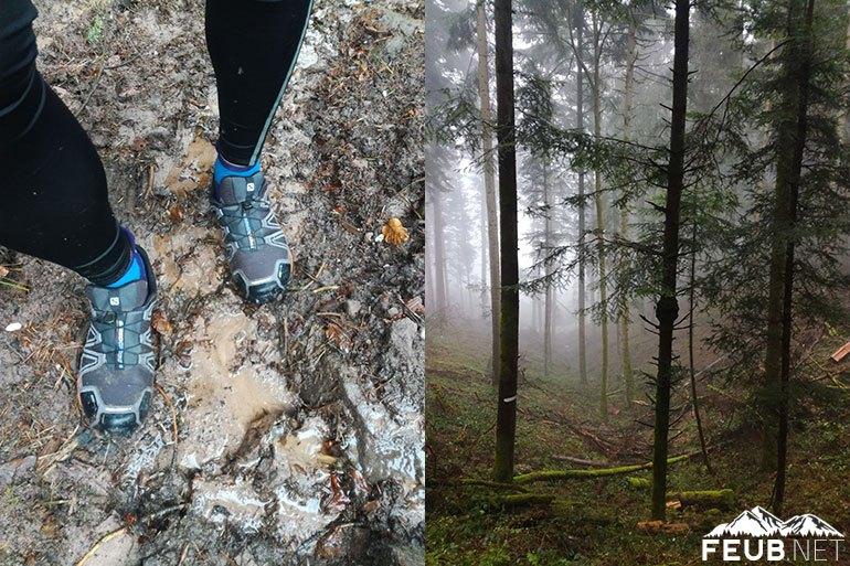 Les jolies forêts humides