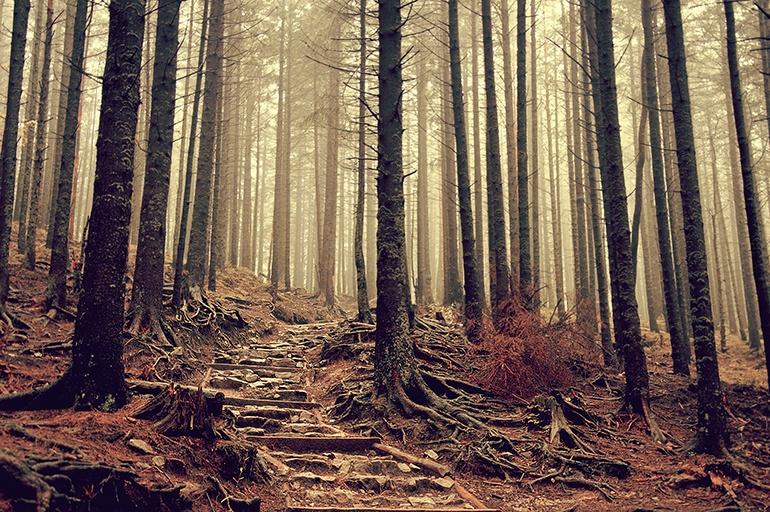 Le bonheur de courir en forêt