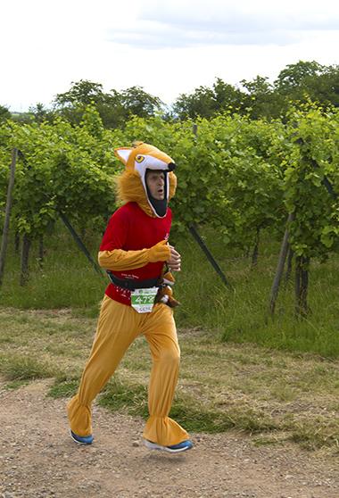 Un renard courant le semi-marathon du vignoble d'Alsace, normal