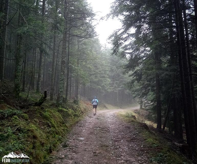 Forêt Vosgienne 2018 - feub.net