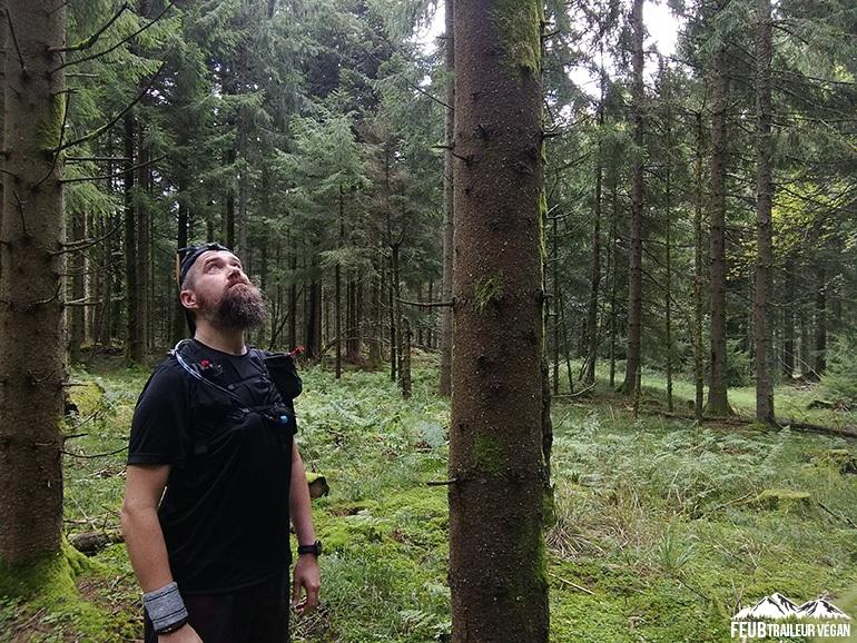 Trail dans les Vosges - feub.net