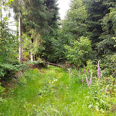 Repousser les tiques grâce aux huiles essentielles lors de vos sorties trail et outdoor