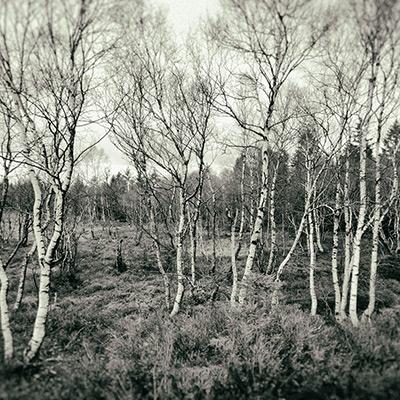 Le trail, ma façon de prendre un bain de forêt