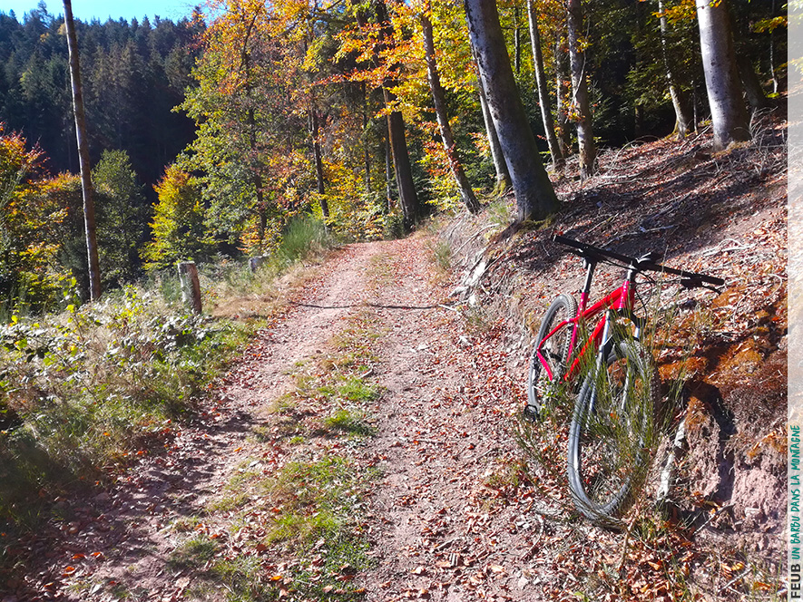 Balade en VTT dans les couleurs de l'automne