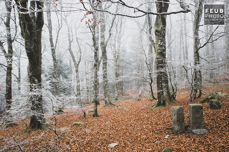 Spitzenfels - Vosges