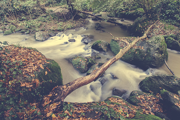 La rivière Treja